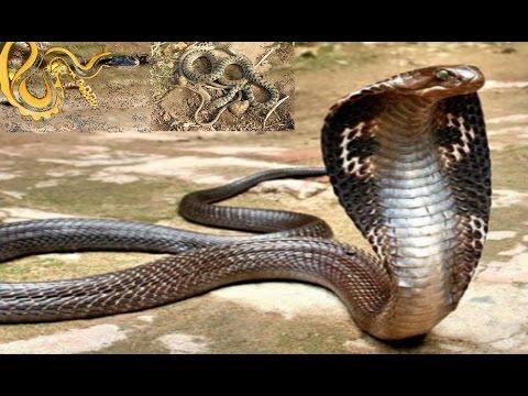 صورة انواع الثعابين , ماهى انواع الثعابين السامه