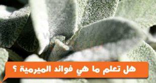 صور عشبة الميرمية , فوائد اعشاب الميرمية للامراض تعالجها