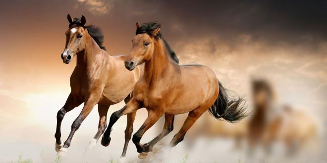 بالصور صور حصان , خلفيات خيول جميلة HD 1440 1