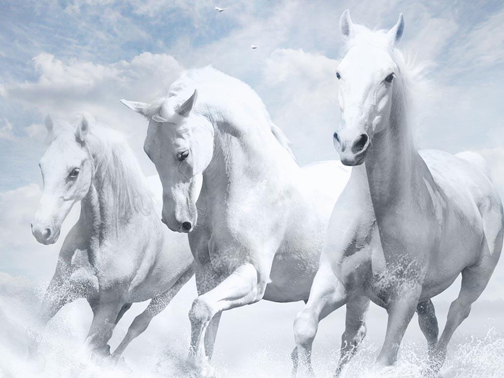 بالصور صور حصان , خلفيات خيول جميلة HD 1440 10
