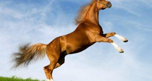 صور صور حصان , خلفيات خيول جميلة HD
