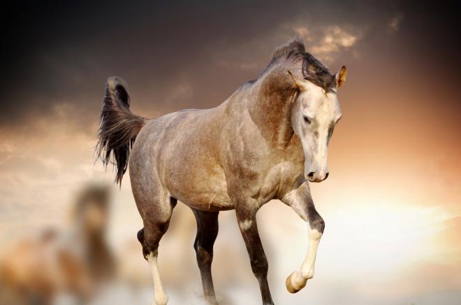 بالصور صور حصان , خلفيات خيول جميلة HD 1440 2