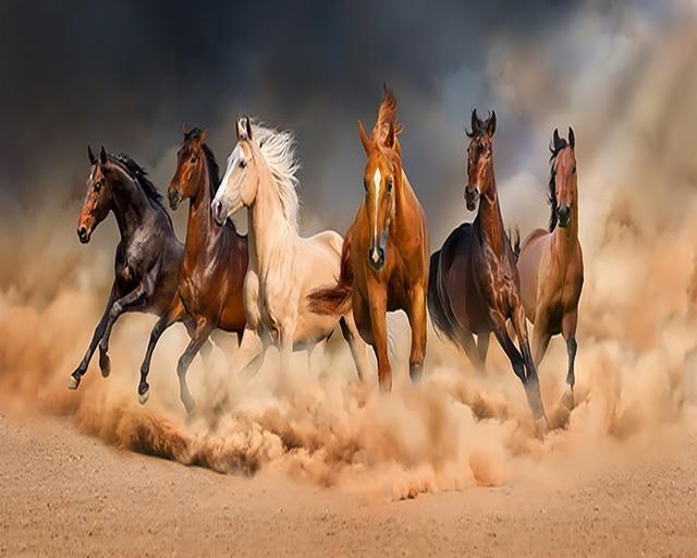 بالصور صور حصان , خلفيات خيول جميلة HD 1440 3