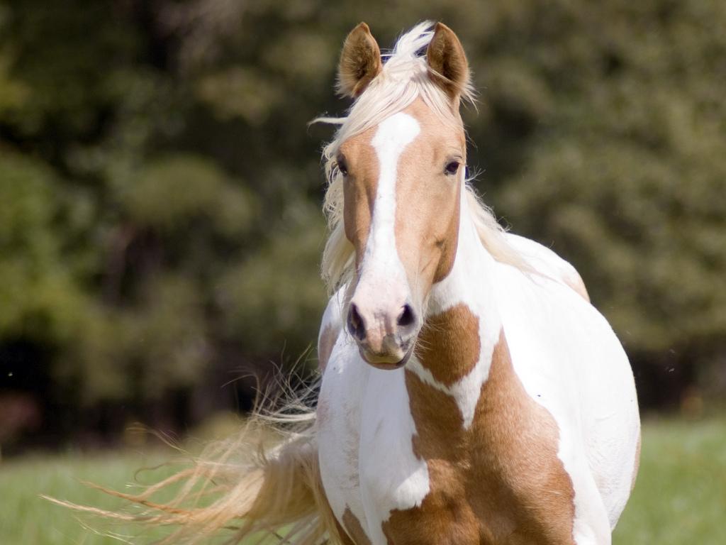 بالصور صور حصان , خلفيات خيول جميلة HD 1440 4
