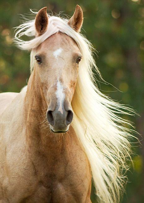 بالصور صور حصان , خلفيات خيول جميلة HD 1440 5
