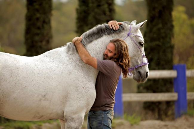 بالصور صور حصان , خلفيات خيول جميلة HD 1440 6