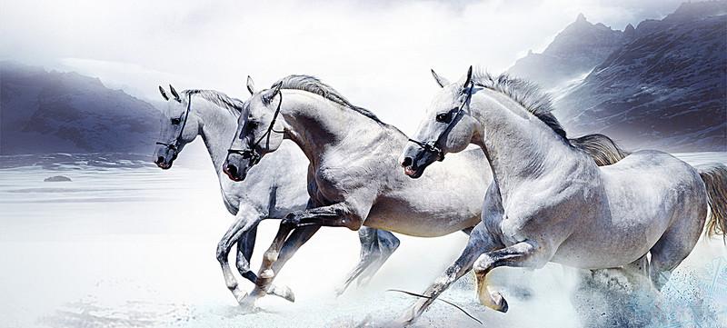 بالصور صور حصان , خلفيات خيول جميلة HD 1440 7