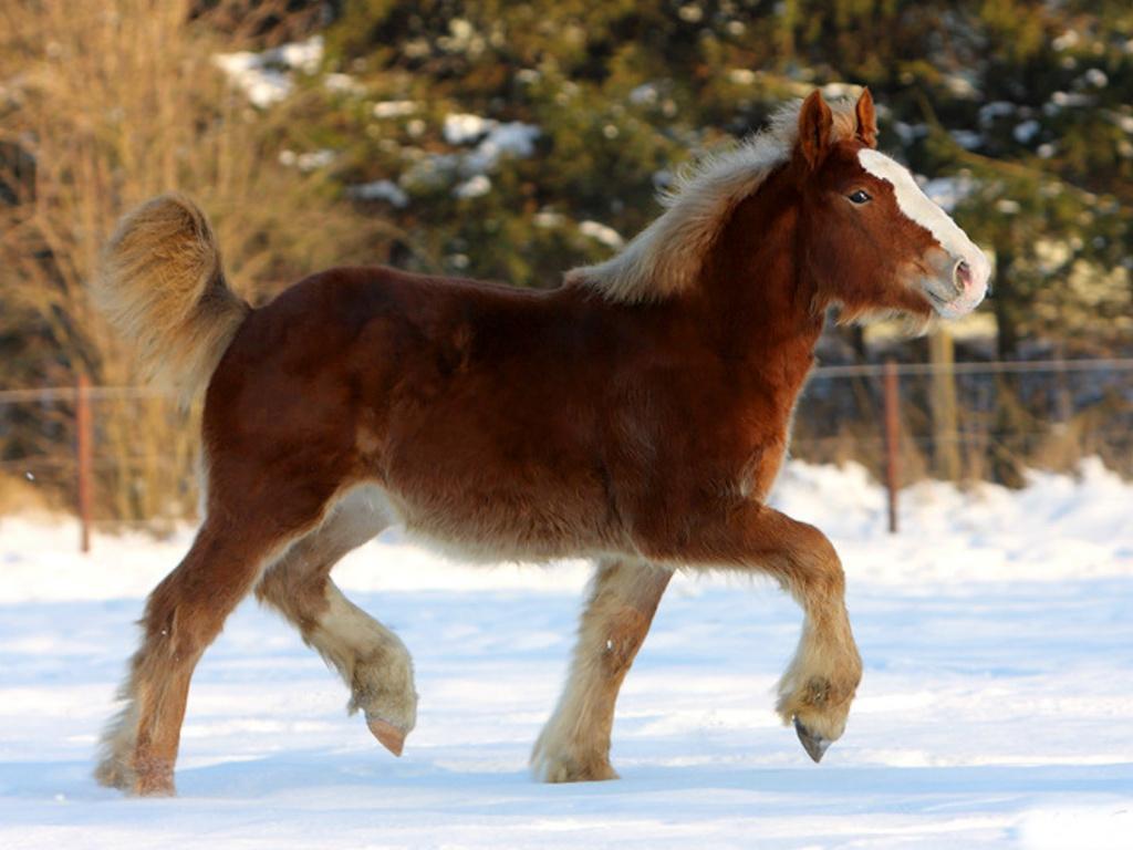 بالصور صور حصان , خلفيات خيول جميلة HD 1440 8