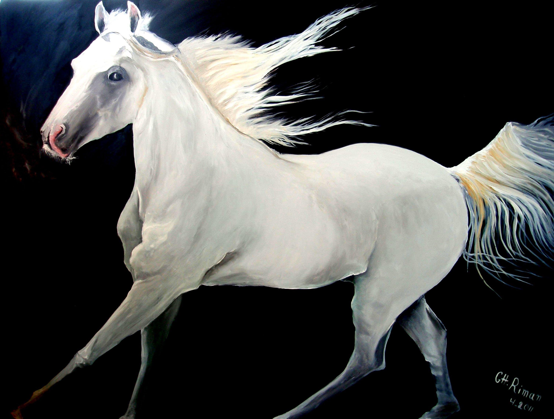 بالصور صور حصان , خلفيات خيول جميلة HD 1440 9
