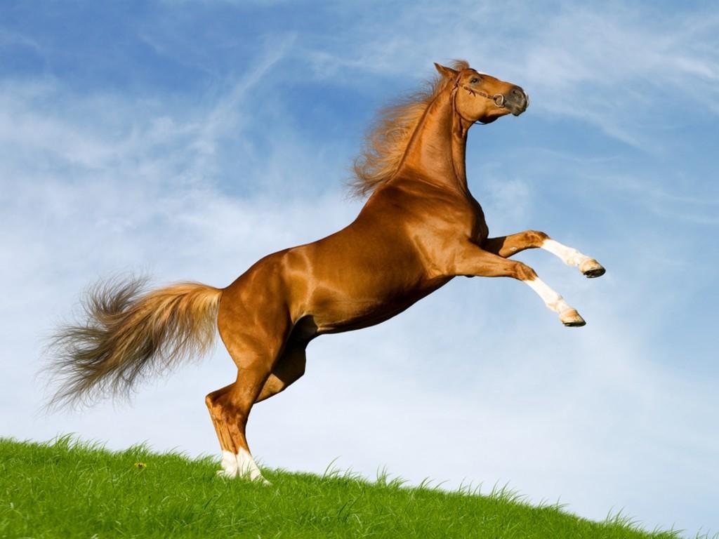 بالصور صور حصان , خلفيات خيول جميلة HD 1440