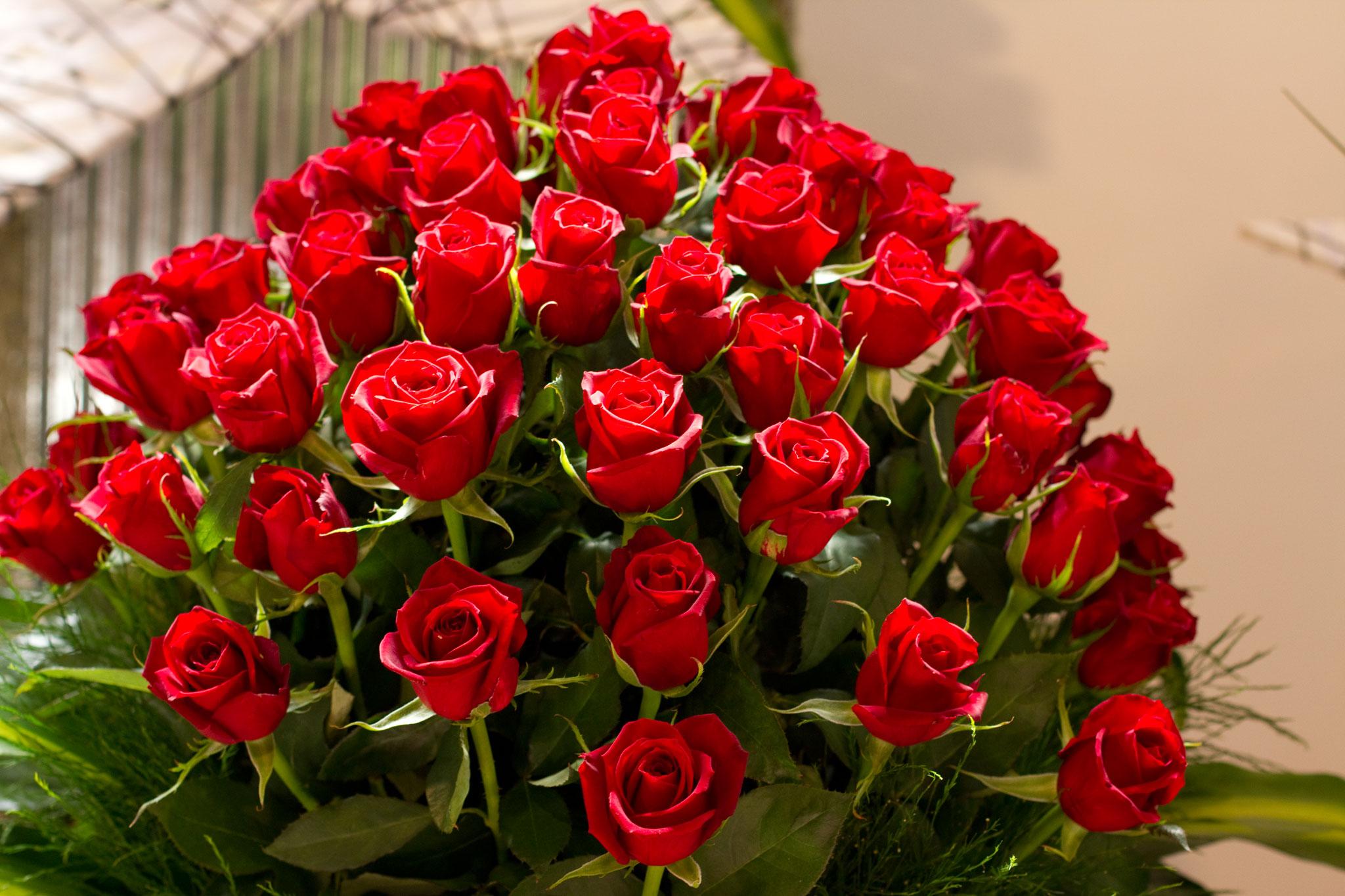 بالصور اجمل صور ورد , اجمل زهور لبوستات الحب 1444 2