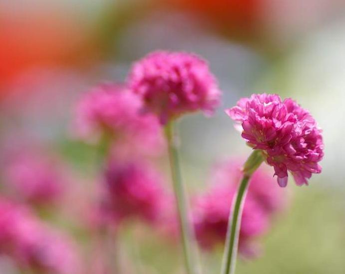 بالصور اجمل صور ورد , اجمل زهور لبوستات الحب 1444 8