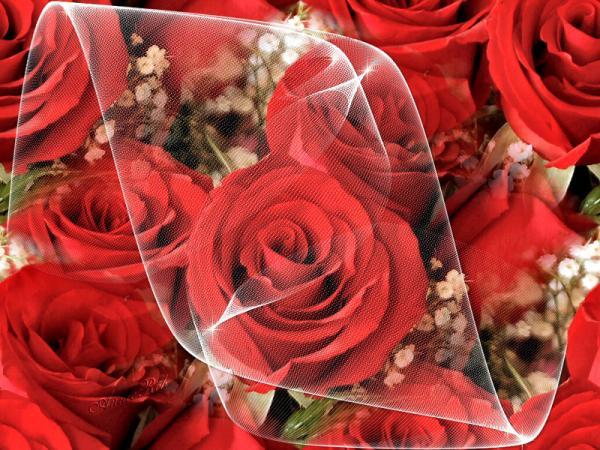 بالصور اجمل صور ورد , اجمل زهور لبوستات الحب 1444 9
