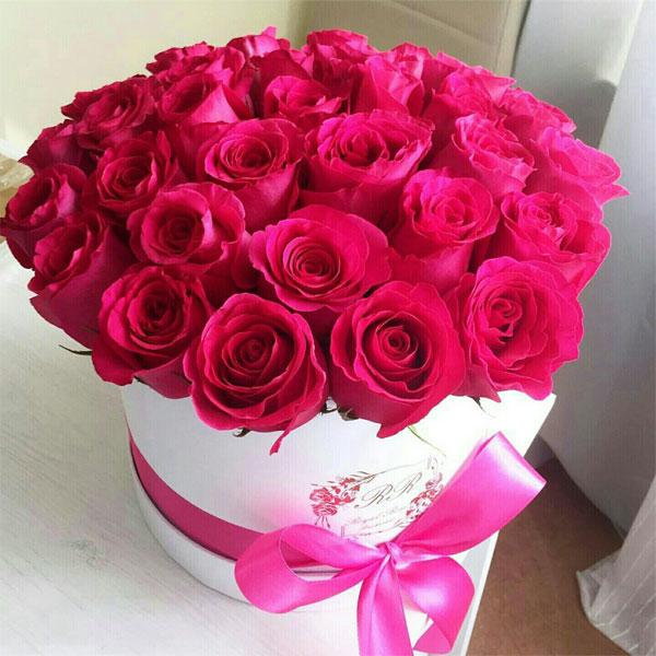 صوره اجمل صور ورد , اجمل زهور لبوستات الحب