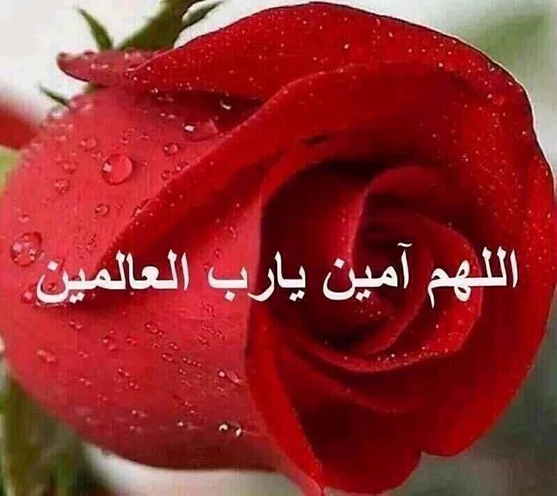 بالصور صور اللهم امين , صور كومنتات اللهم امين يارب العالمين 1446 3