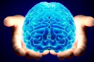 صور معلومات علمية , حقائق علمية تدهشك عن عقل الانسان