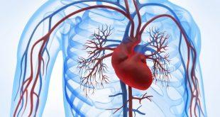 بالصور علاج مرض القلب , طرق علاج امراض القلب 1747 3 310x165