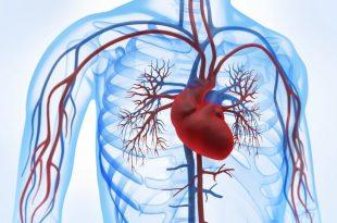 بالصور علاج مرض القلب , طرق علاج امراض القلب 1747 3 310x205