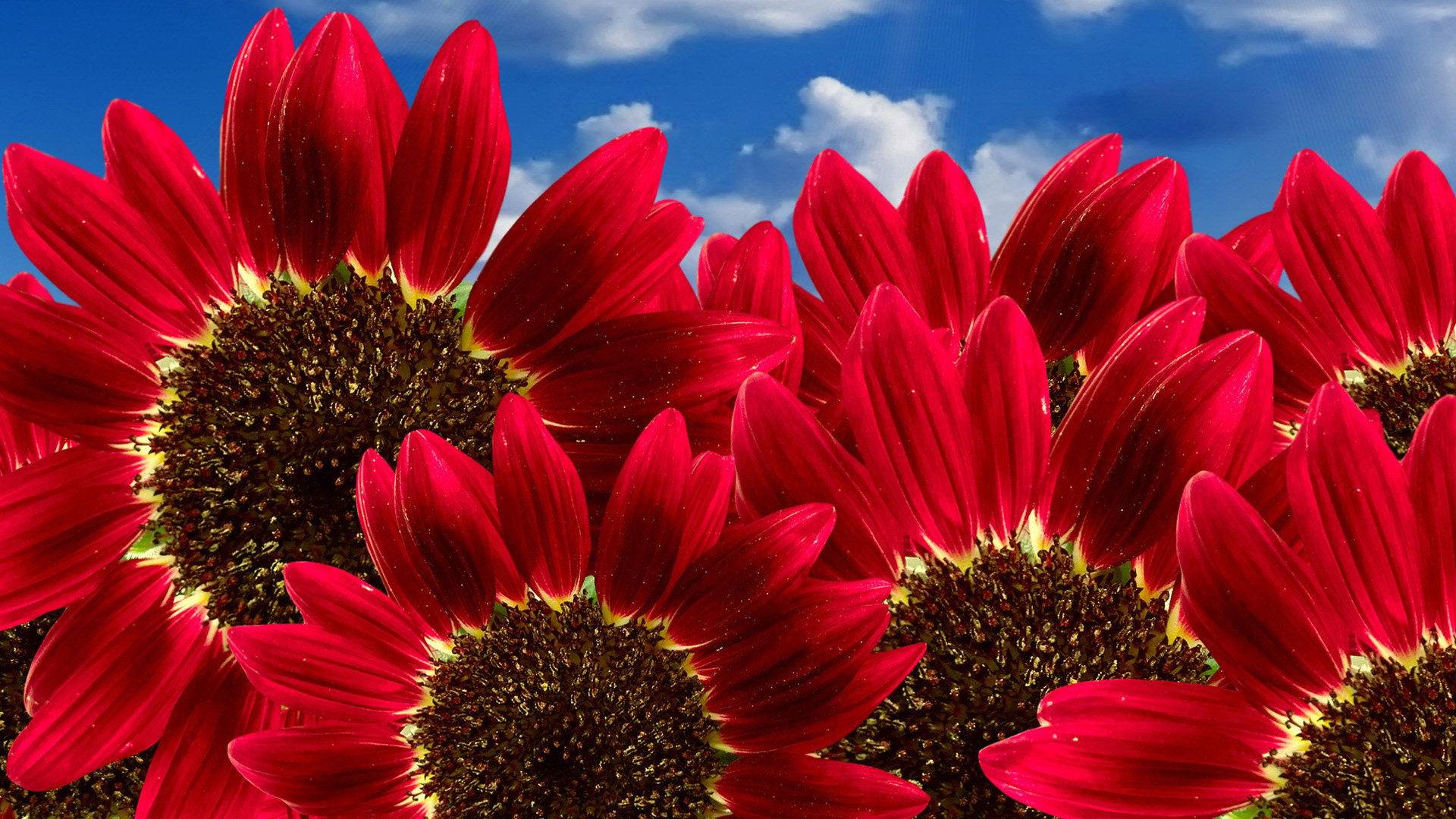 بالصور صور ورود جميلة , اجمل صور للورد 3265 6