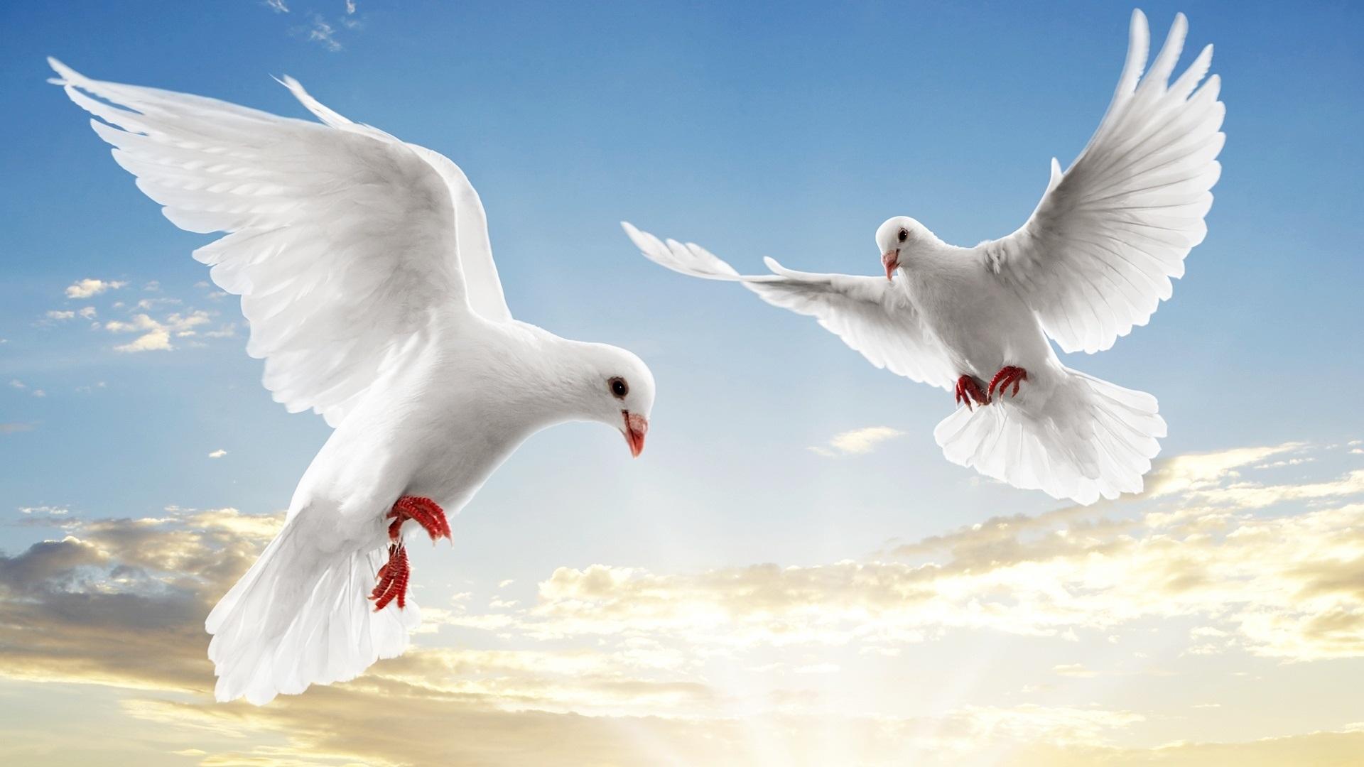 صوره صور عن السلام , كلمات عن السلام