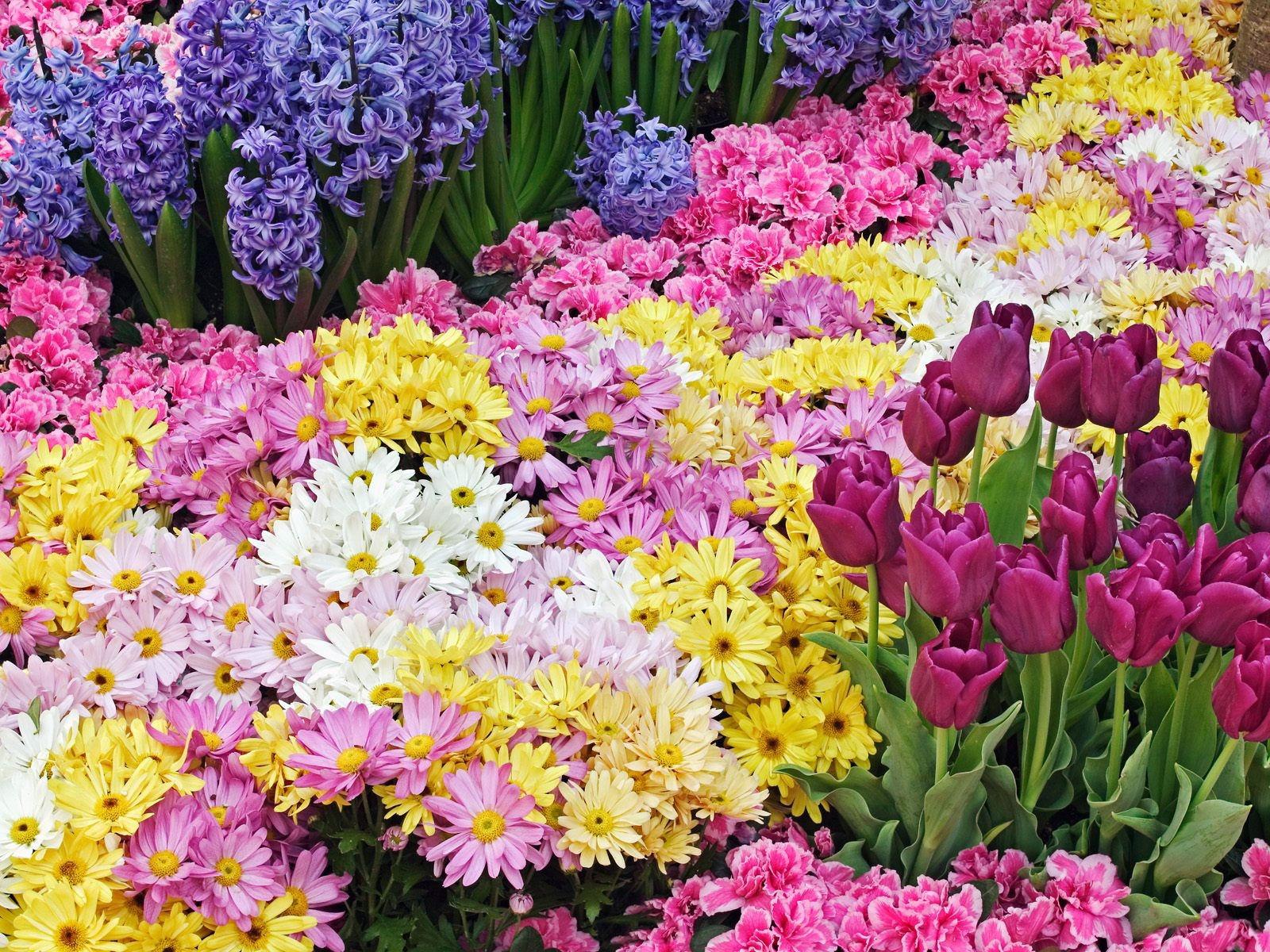 بالصور صور اجمل ورد , اجمل صور لبوكيهات الورد 3493 1