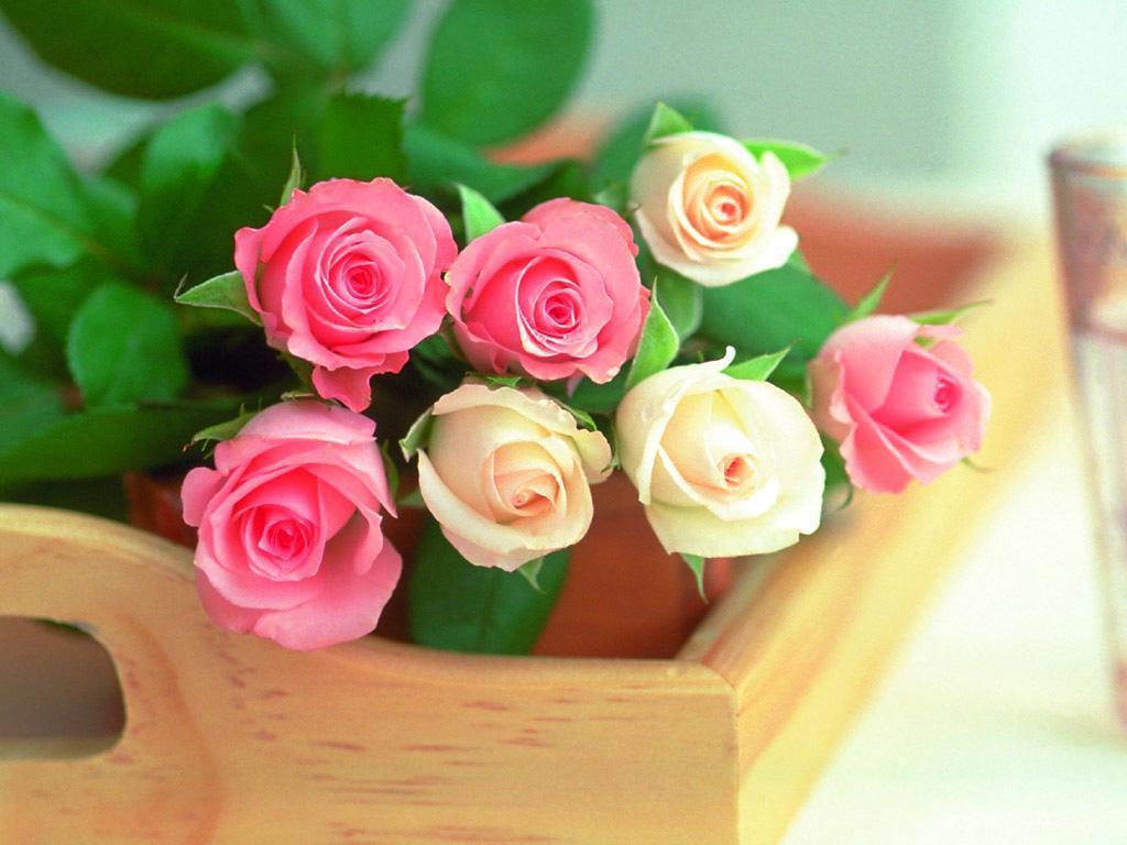بالصور صور اجمل ورد , اجمل صور لبوكيهات الورد 3493 10