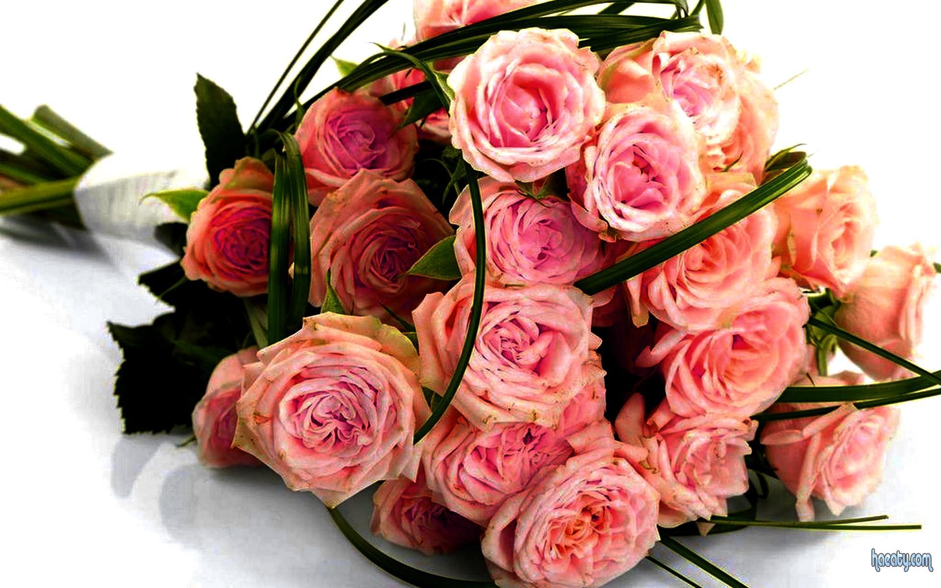 بالصور اجمل بوكيه ورد فى الدنيا , صور الورد روعة 3495 10
