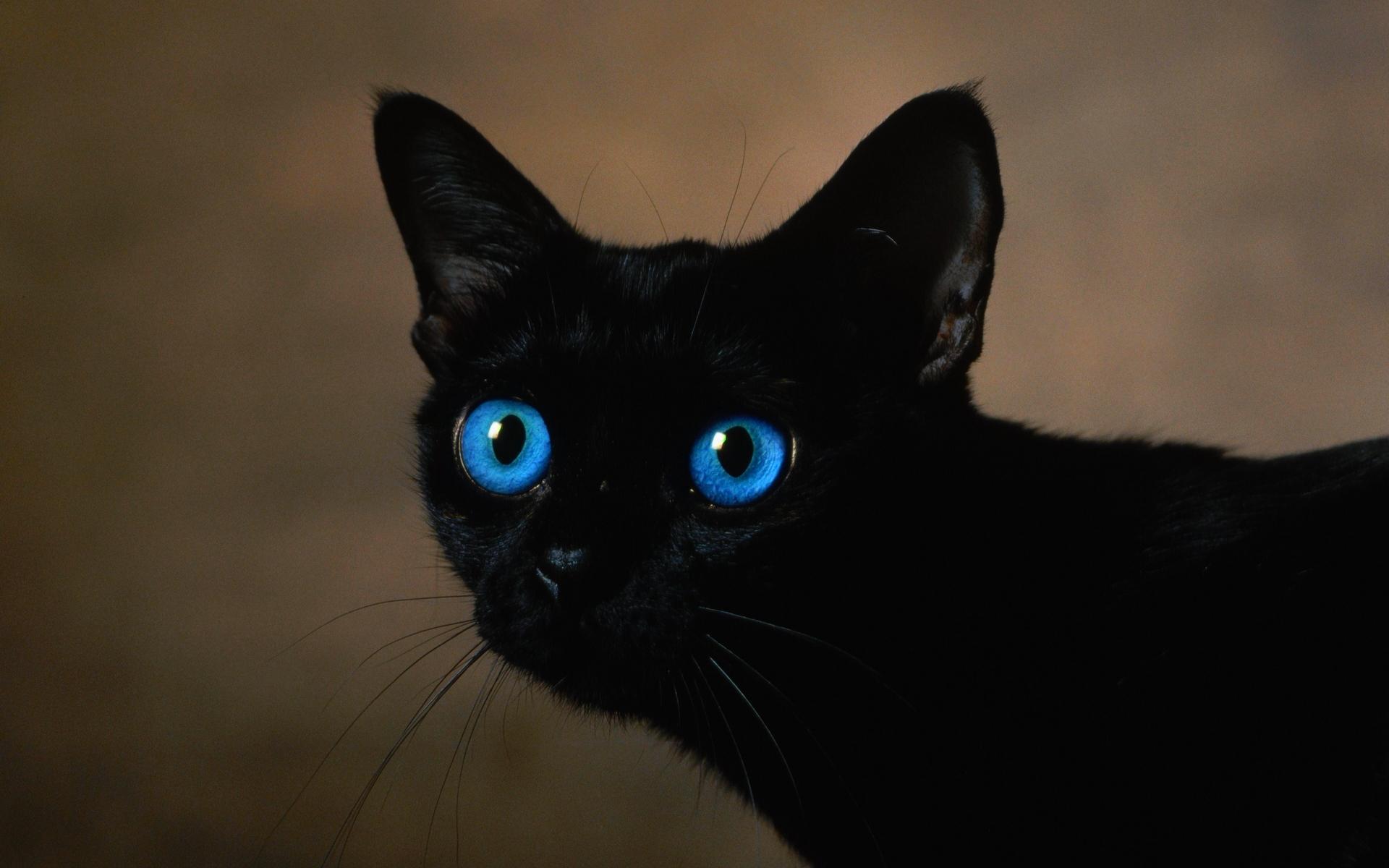 بالصور عيون زرقاء , صور لاجمل العيون الملونة 3586 8