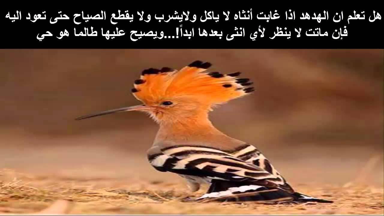 بالصور هل تعلم عن الحيوانات , معلومات لم تسمع عنها من قبل سبحان الله 3620 12