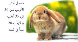صوره هل تعلم عن الحيوانات , معلومات لم تسمع عنها من قبل سبحان الله
