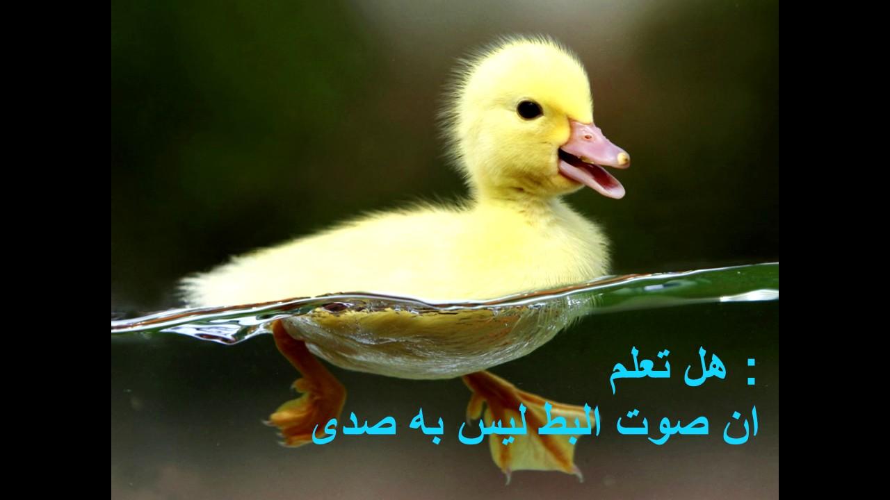 صورة هل تعلم عن الحيوانات , معلومات لم تسمع عنها من قبل سبحان الله 3620 2