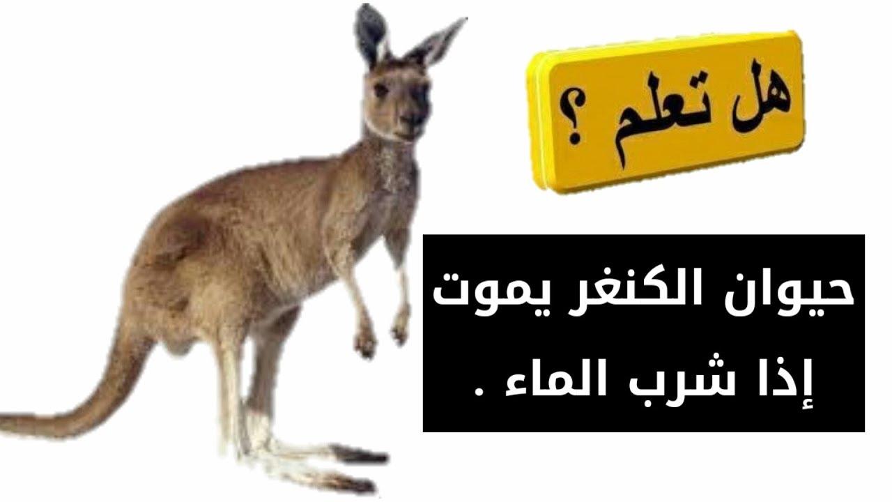 صورة هل تعلم عن الحيوانات , معلومات لم تسمع عنها من قبل سبحان الله 3620 3