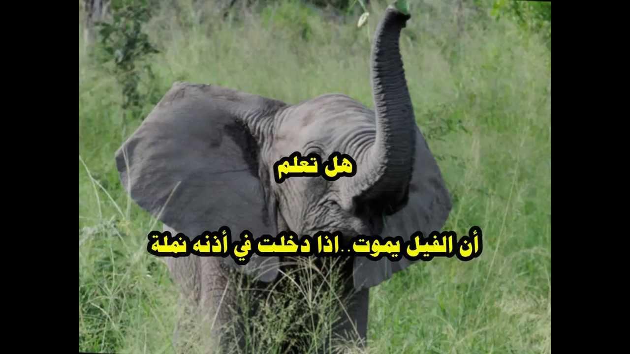 صورة هل تعلم عن الحيوانات , معلومات لم تسمع عنها من قبل سبحان الله 3620 4