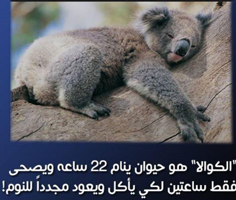 صورة هل تعلم عن الحيوانات , معلومات لم تسمع عنها من قبل سبحان الله 3620 5