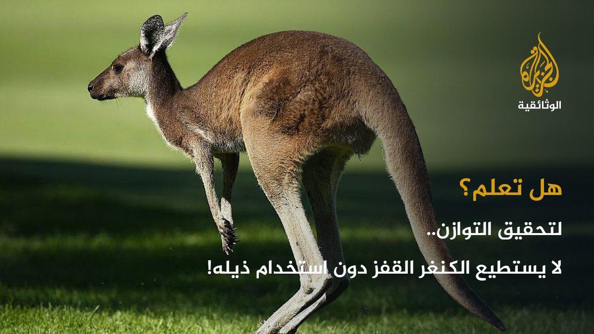بالصور هل تعلم عن الحيوانات , معلومات لم تسمع عنها من قبل سبحان الله 3620 9