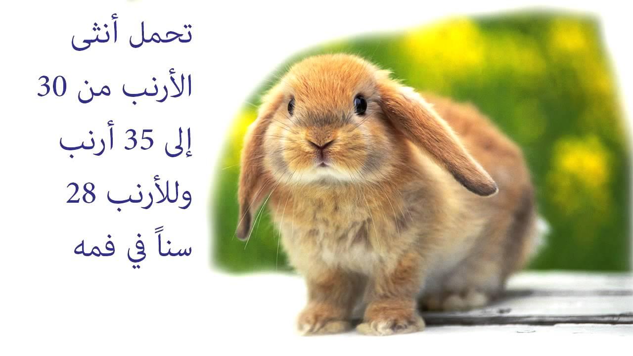 صورة هل تعلم عن الحيوانات , معلومات لم تسمع عنها من قبل سبحان الله 3620
