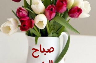 صوره ورد صباح الخير , صباح الورد علي الورد