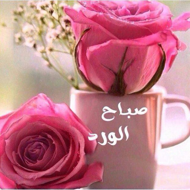 صورة ورد صباح الخير , صباح الورد علي الورد 396 6
