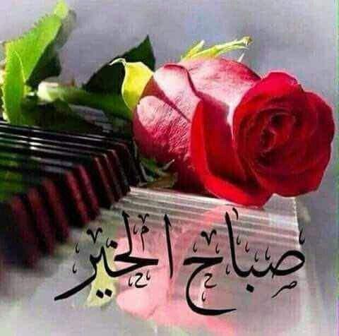 صورة ورد صباح الخير , صباح الورد علي الورد 396 8
