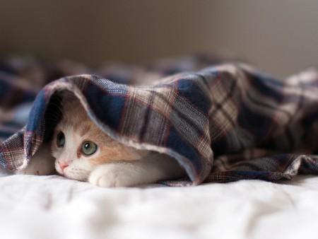 بالصور صور قطط جميلة , كائنات البهجه في المنازل 429 10