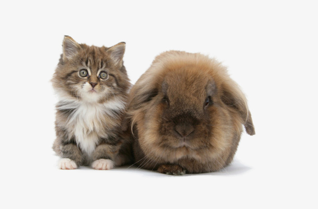 بالصور صور قطط جميلة , كائنات البهجه في المنازل 429 11