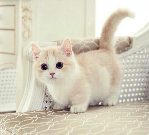 بالصور صور قطط جميلة , كائنات البهجه في المنازل 429 12