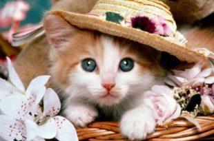 صوره صور قطط جميلة , كائنات البهجه في المنازل