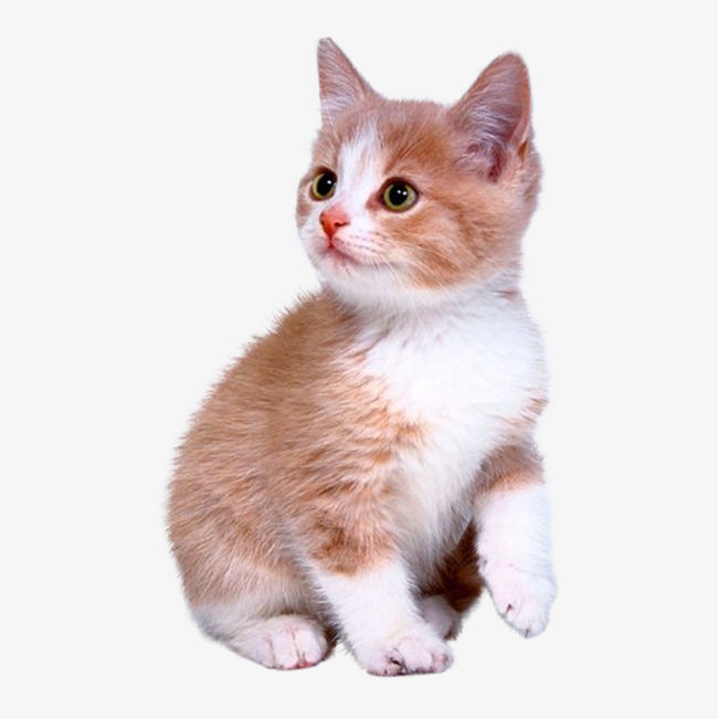 بالصور صور قطط جميلة , كائنات البهجه في المنازل 429 3