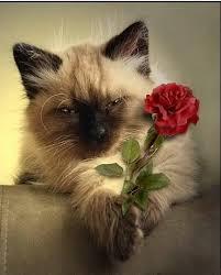 بالصور صور قطط جميلة , كائنات البهجه في المنازل 429 4
