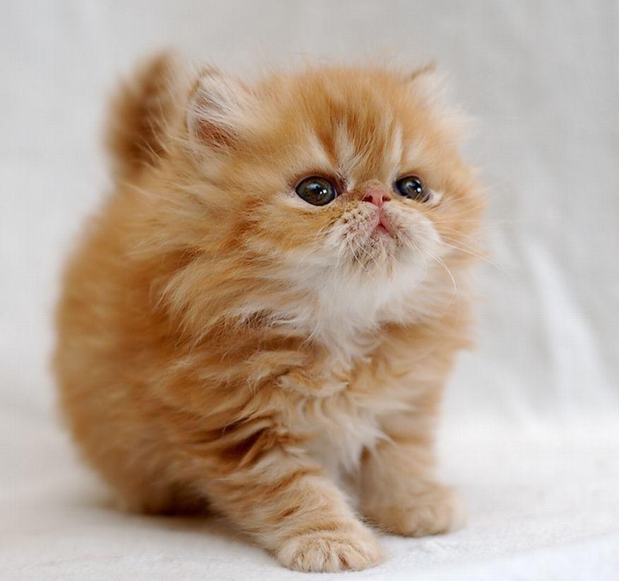 بالصور صور قطط جميلة , كائنات البهجه في المنازل 429 5