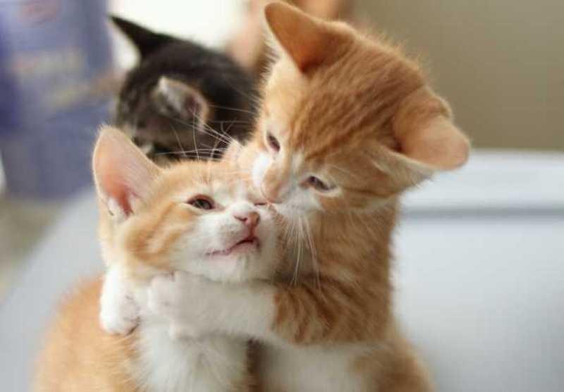 بالصور صور قطط جميلة , كائنات البهجه في المنازل 429 6