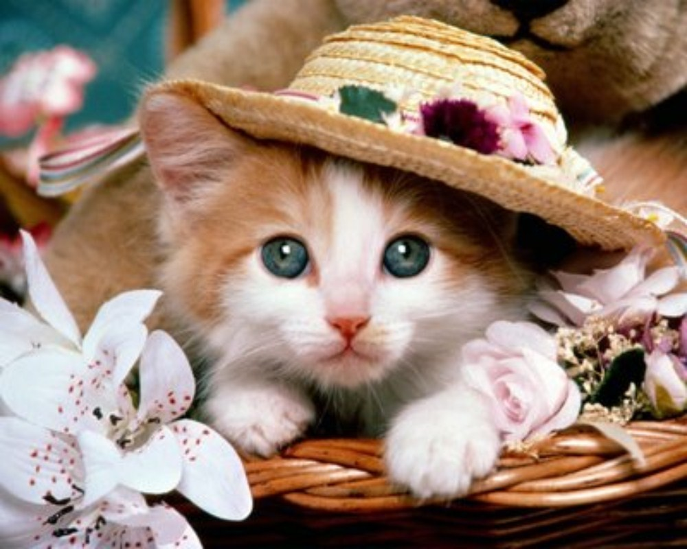 بالصور صور قطط جميلة , كائنات البهجه في المنازل 429