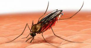 بالصور مرض الملاريا , الملاريا مرض معدي تعرف علي خطورته 4884 3 310x165