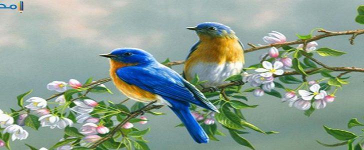 صورة صور عصافير , سبحان من خلق الجمال